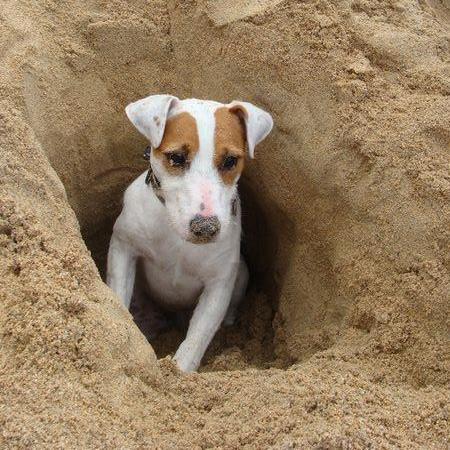 Le chien à la plage