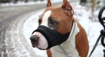 Lire la suite: Conseils pratiques pour toutes les personnes possédant un chien « catégorisé »