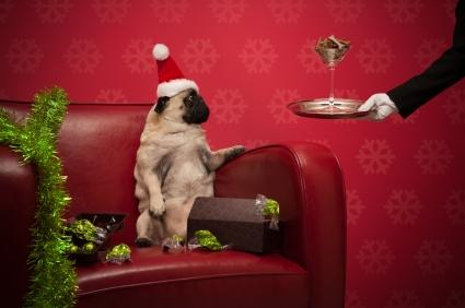 Lire la suite: Les risques de Noël chez le chien : les intoxications par les aliments et les boissons