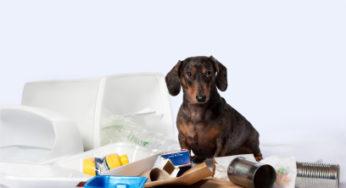 Lire la suite: Les intoxications chez le chien