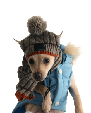 Petit chien avec une écharpe et un bonnet