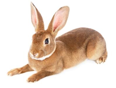 Lire la suite: Les pododermatites chez les rongeurs et lapins