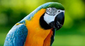 Lire la suite: Les troubles respiratoires chez les oiseaux