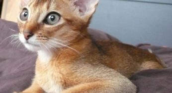 Lire la suite: Mon chat maigrit