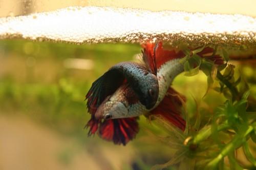 Lire la suite: La reproduction des poissons
