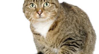 Lire la suite: Le chat senior : implications sur les dents, les yeux et les oreilles