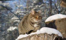 Lire la suite: Hiver : le chat ayant accès à l'extérieur