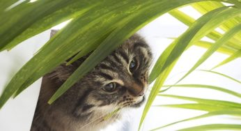 Plantes dangereuses pour les chats