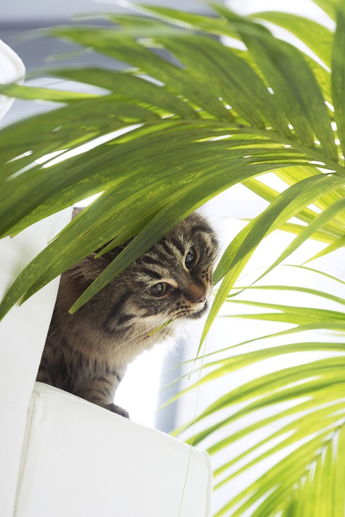 Les intoxications par les plantes urgences du chat for Plante toxique chat