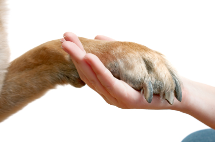 Patte de chien tope dans la main