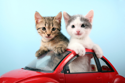 Chatons dans une petit voiture rouge