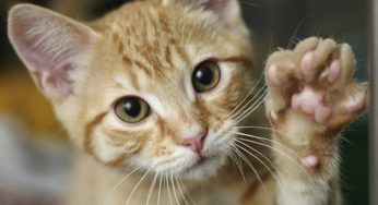 Lire la suite: La maladie des griffes du chat