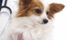 b_250_0_16777215_00_images_articles_chien_question_du_mois-chien.jpg