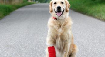 Lire la suite: L'assurance santé animale en 10 questions