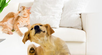 chiens. Black Bedroom Furniture Sets. Home Design Ideas
