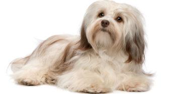 Lire la suite: Assurance santé animale : pourquoi souscrire dès le plus jeune âge ?