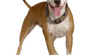 Lire la suite: 39 contrats d'assurance santé chien et chat
