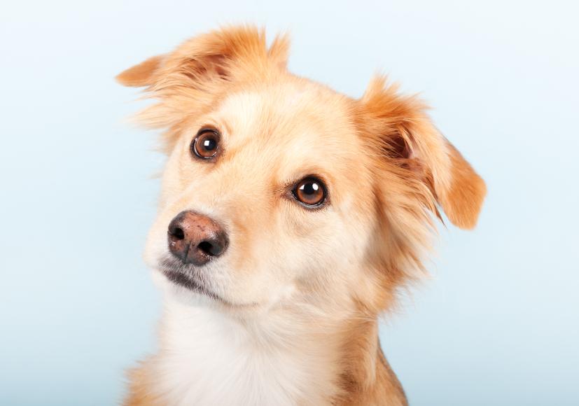 Lire la suite: Assurance santé animale : le retard de la France