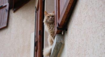 Lire la suite: L'hyperthyroïdie du chat