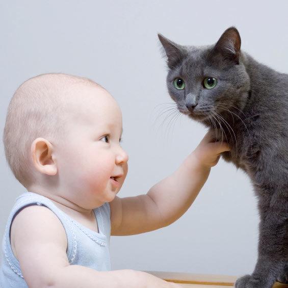 Le chat et l'arrivée d'un bébé - WanimoVéto
