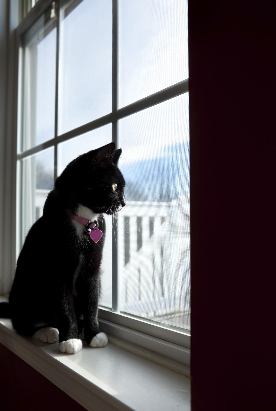 Lire la suite: Le chat et le déménagement