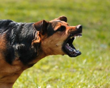 Mon chien a mordu : que faire ? - Comportement du chien