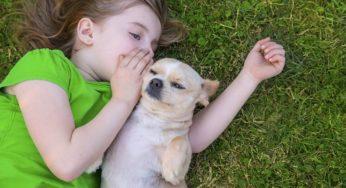 Lire la suite: Le chien et l'enfant