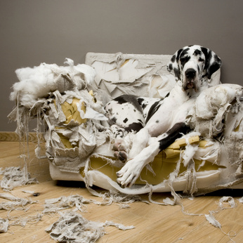 Lire la suite: Le syndrome Hs-Ha : Hypersensibilité-Hyperactivité chez le chien