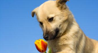 chien_fleur