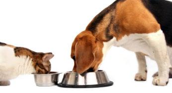 Lire la suite: Vers une alimentation plus naturelle pour mon chien