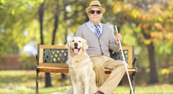 Le chien guide est plus qu'un compagnon