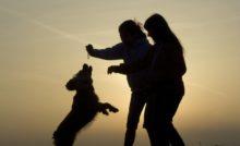 Lire la suite: La médiation animale