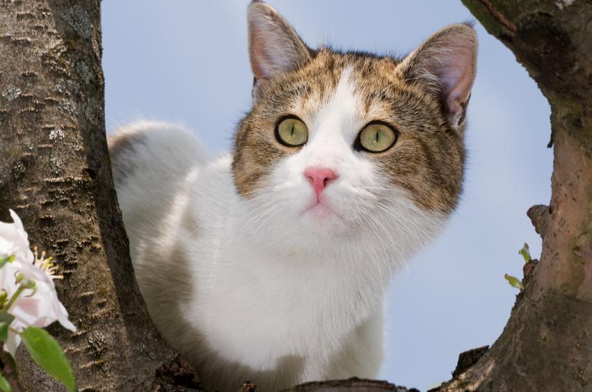 Lire la suite: L'arthrose chez le chat