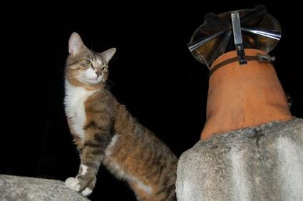 Chat sur un toit la nuit