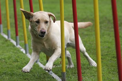 Agility : un sport à partager - Loisirs avec votre chien