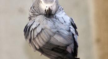 epilepsie de l'oiseau