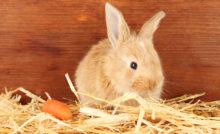 Lire la suite: Cage à lapin : comment préparer son habitat ?