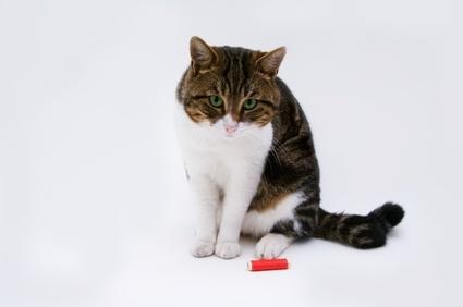 Lire la suite: La cystite idiopathique chez le chat
