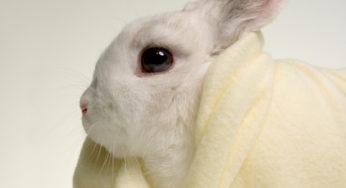 Lire la suite: Le lapin : Hygiène et soins