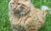 Lire la suite: Idées reçues sur les parasites du chat