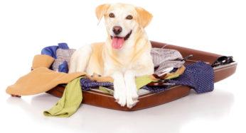 Sac de transport pour chien- Caisse de transport pour chien