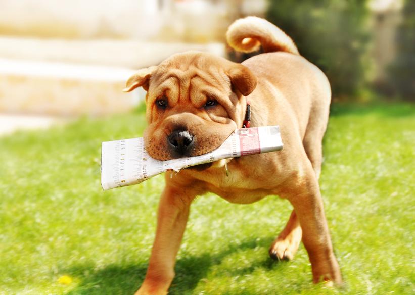 un chien est fidèle à sa routine