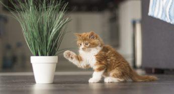 Lire la suite: Les dangers qui guettent votre chaton
