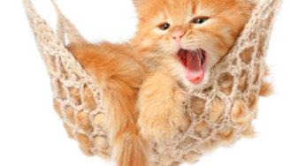 Votre chaton dort près de 20h par jour !