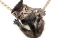 Lire la suite: Les maladies qui guettent votre chaton