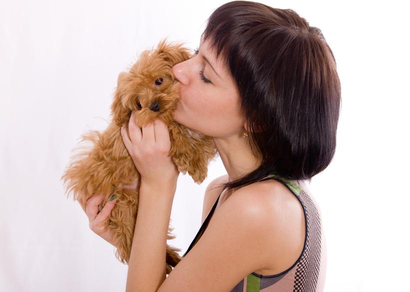 Hyperattachement chien