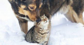 Lire la suite: Comme chien et chat : cohabitation du chat avec d'autres animaux