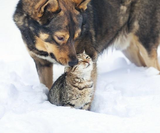 rencontre chien adulte et chat adulte tchat adulte rencontre