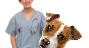 10 questions à poser à votre vétérinaire