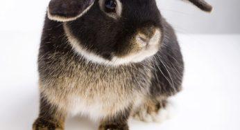 Lire la suite: Présentation du lapin